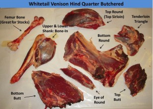 Hind Quarter Seperated with Labels